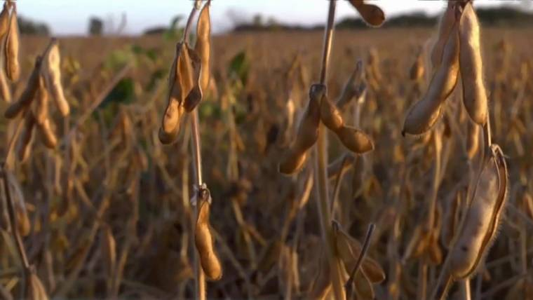 Genetically Modified Crops Are Safe, Report Says