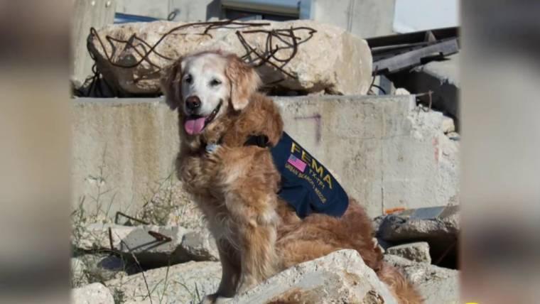 Bretagne last 9 11 ground zero search dog dies at age 16