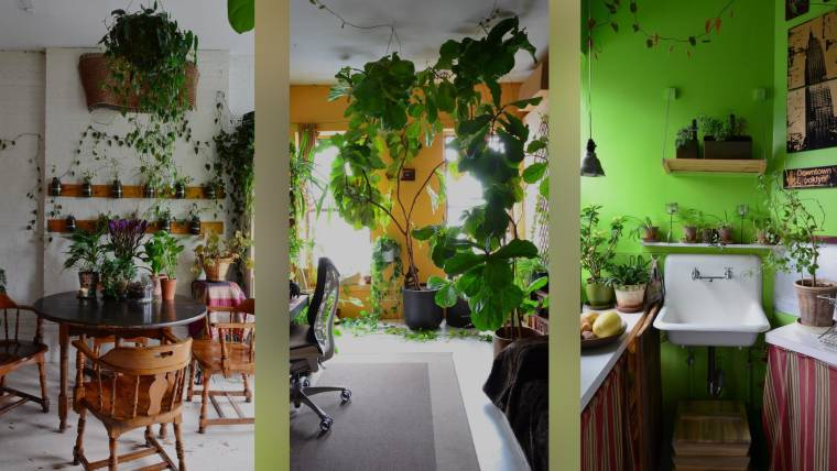 See This Nyc Apartment With More Than 600 Plants
