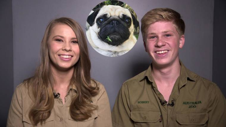 Bindi Irwin and fiance Chandler Powell introduce new puppy
