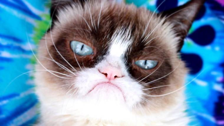 tdy_news_grumpy_cat_190517_1920x1080.760;428;7;70;5.jpg