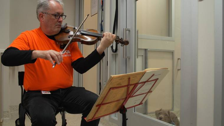 Professional violinist soothes shelter dogs with music: 'It's stunning to see'