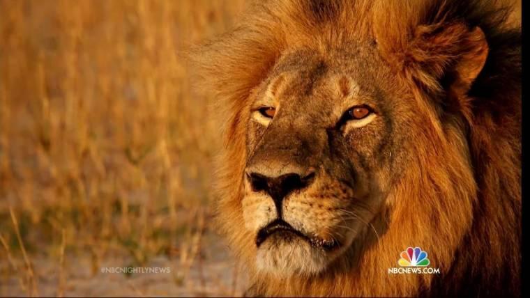 Cecil the Lion Killer Walter James Palmer Has Bear-Related Felony Record