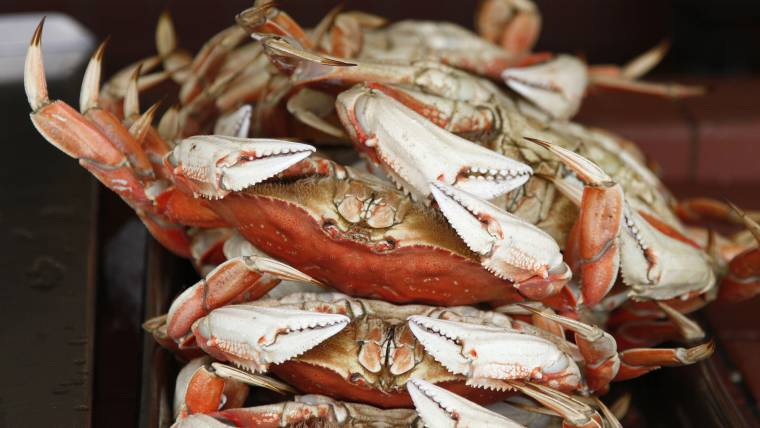 California Crabbing Delayed Due to Rise in Water Toxins