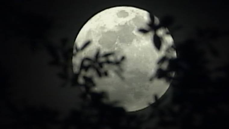 Happy Supermoon! Celebrate lunar largeness as a planetary holiday