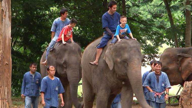 Trunk Therapy How Elephants Are Helping Thailands Autistic Kids