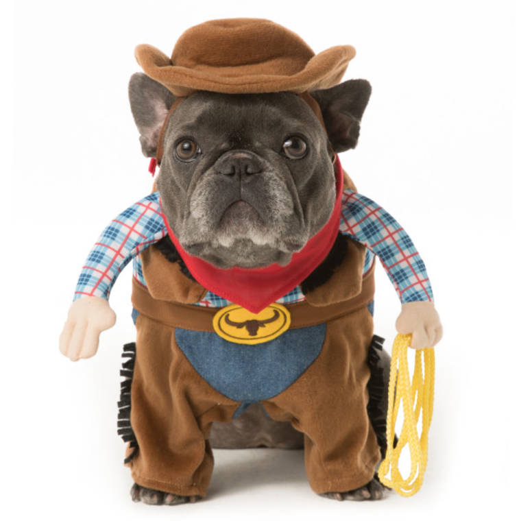 Halloween dog costume ideas 32 easy cute costumes for your canine solutioingenieria Choice Image